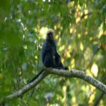 Parambikulam- Wildlife Photography