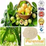 Perennial Garcinia Cambogia Extract