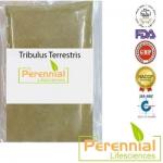 Perennial Tribulus Terrestris Extract Powder