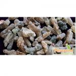 Perennial Boswellia Serrata Extract