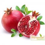 Perennial Spray Dried Pomegranate Powder