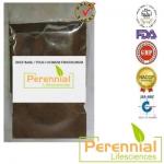 Perennial Holy Basil / Tulsi / Ocimum Tenuiflorum