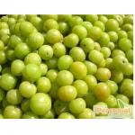 Amla Extract, Emblica Officinalis Extract