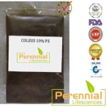 Perennial Coleus Powder