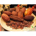 Perennial Cocoa Extract