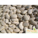 Perennial White Kidney Bean Extract